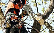 Кастрачки и триони STIHL за поддръжка на дървета